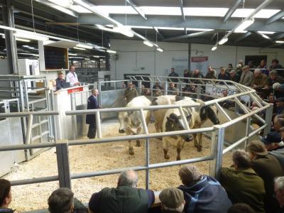 Holsworthy Livestock market image