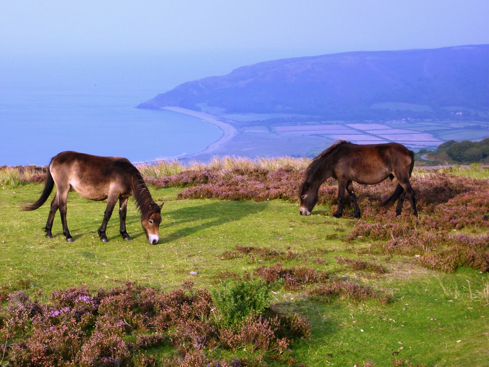 Exmoor-Devon-Moorparks-Holiday-Cottage